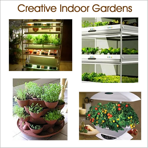 Indoor Vegetable Gardening Growing Bulbs Indoors Gardens