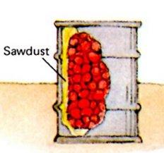 steel drum root cellar