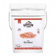 Auguson Farms Red Wheat